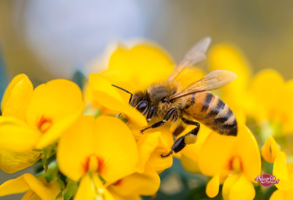 Productos de abejas y sus beneficios